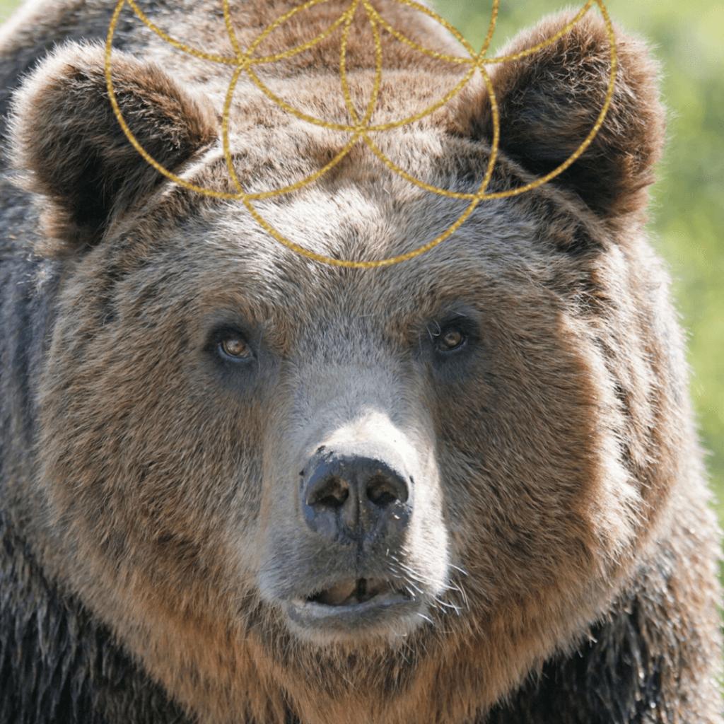 SELF CARE LOVE BEAR SHAMANIC JOURNEY